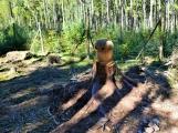 Vojenské lesy otevřely v Brdech naučnou stezku, která představuje minulost i budoucnost brdské přírody (35)
