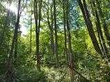 Vojenské lesy otevřely v Brdech naučnou stezku, která představuje minulost i budoucnost brdské přírody (25)