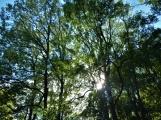 Vojenské lesy otevřely v Brdech naučnou stezku, která představuje minulost i budoucnost brdské přírody (28)