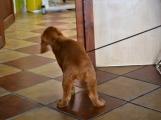 V Rožmitále pod Třemšínem otevřela dlouho očekávaná veterinární ordinace (8)