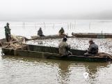 Hořejší Padrťský  rybník vydal své bohatství (14)