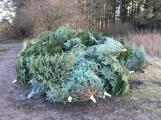 Nezakoupené vánoční stromky potkal drsný osud. Válí se v lese jako smetí! (7)