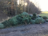 Nezakoupené vánoční stromky potkal drsný osud. Válí se v lese jako smetí! (5)