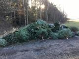 Nezakoupené vánoční stromky potkal drsný osud. Válí se v lese jako smetí! (4)