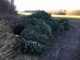 Nezakoupené vánoční stromky potkal drsný osud. Válí se v lese jako smetí! (2)