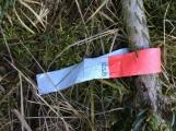 Nezakoupené vánoční stromky potkal drsný osud. Válí se v lese jako smetí! (1)