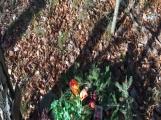 Nedaleko Drkolnova vzniká nelegální hřbitov pro zvířata (1)