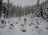Zimní Brdy uvítaly účastníky pochodu pořádnou sněhovou nadílkou (69)