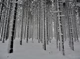 Zimní Brdy uvítaly účastníky pochodu pořádnou sněhovou nadílkou (72)