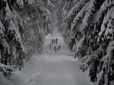 Zimní Brdy uvítaly účastníky pochodu pořádnou sněhovou nadílkou (61)
