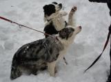 Zimní Brdy uvítaly účastníky pochodu pořádnou sněhovou nadílkou (9)