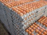 Zakázané látky, antibiotika v kuřecím mase nebo pesticidy v ovoci? To vše k nám dovážejí z Polska (8)