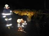 Pád stromu přes silnici si vyžádal noční výjezd hasičů ()
