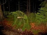 Pád stromu přes silnici si vyžádal noční výjezd hasičů (8)