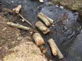 V lesoparku začalo kácení nebezpečných stromů (1)