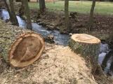 V lesoparku začalo kácení nebezpečných stromů (2)
