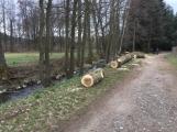 V lesoparku začalo kácení nebezpečných stromů (3)