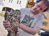 Dva ošklivě poraněné dravce má na svědomí neznámý pachatel! ()