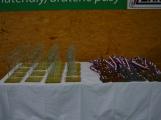Na turnaj v judu se do Příbrami sjelo 215 závodníků (20)