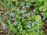 Příbramský lesopark je plný bylinek (8)