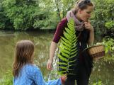 Příbramský lesopark je plný bylinek (6)