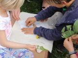 Příbramský lesopark je plný bylinek (1)