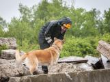 Příbramští záchranní psi vyzkoušeli sutinový trenažér ()