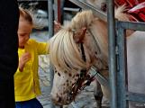 V Kozárovicích dali o víkendu přednost sportu, v Březnici pouťovému veselí (76)
