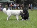 Den pro zvíře nejen potěšil, ale i pomohl ()