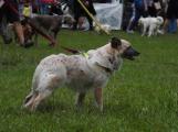 Den pro zvíře nejen potěšil, ale i pomohl (3)