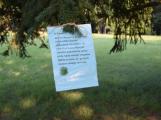 Netopýři brázdí vzduch nad dobříšským zámeckým parkem každou letní noc (5)