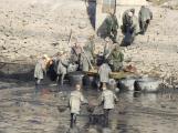 V Novém rybníce plavalo zhruba 7 metráků lína obecného ()