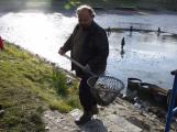 V Novém rybníce plavalo zhruba 7 metráků lína obecného (16)