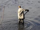 V Novém rybníce plavalo zhruba 7 metráků lína obecného (17)