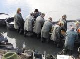 V Novém rybníce plavalo zhruba 7 metráků lína obecného (19)