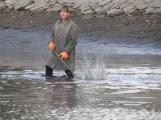 V Novém rybníce plavalo zhruba 7 metráků lína obecného (23)