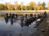 V Novém rybníce plavalo zhruba 7 metráků lína obecného (26)