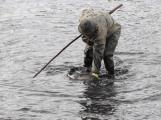 V Novém rybníce plavalo zhruba 7 metráků lína obecného (14)