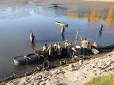 V Novém rybníce plavalo zhruba 7 metráků lína obecného (13)