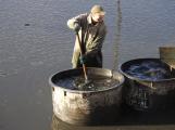 V Novém rybníce plavalo zhruba 7 metráků lína obecného (4)