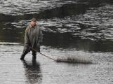 V Novém rybníce plavalo zhruba 7 metráků lína obecného (6)