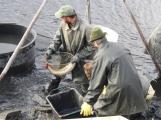 V Novém rybníce plavalo zhruba 7 metráků lína obecného (8)
