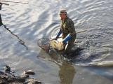 V Novém rybníce plavalo zhruba 7 metráků lína obecného (10)