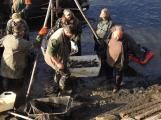 V Novém rybníce plavalo zhruba 7 metráků lína obecného (11)