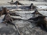 Orlík odhalil zatopené vesnice (8)