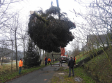 Příbramské náměstí ode dneška zdobí vánoční strom (2)
