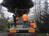 Příbramské náměstí ode dneška zdobí vánoční strom (3)