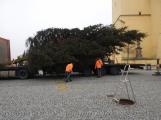 Příbramské náměstí ode dneška zdobí vánoční strom (10)