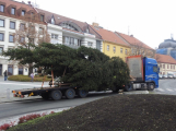Příbramské náměstí ode dneška zdobí vánoční strom (12)