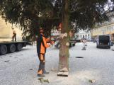 Příbramské náměstí ode dneška zdobí vánoční strom (7)